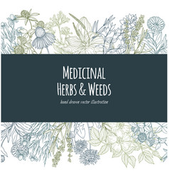 Horizontal banner with color medicinal flowers and vector