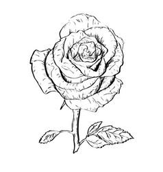 ink rose outline vector image vector image
