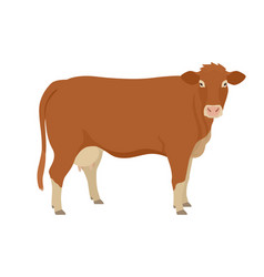 Limousin cow breeds domestic cattle flat vector