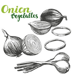 onion vegetable set hand drawn vector image