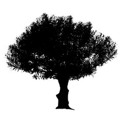olive tree silhouette vector image vector image