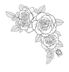 Beautiful black and white bouquet rose and leaves vector