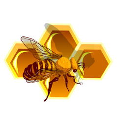 Beeswax and bee vector