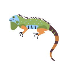bright colored iguana isolated on white background vector image