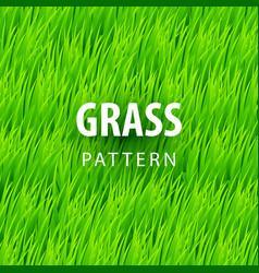 fresh grass seamless vector image