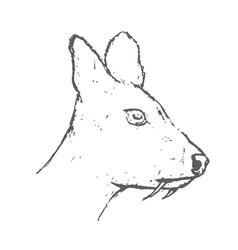 Hand drawn musk deer head sketch vector
