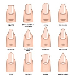 Nail shape set2 resize vector image vector image