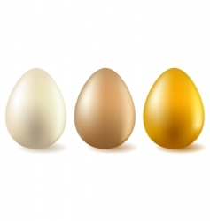 three realistic eggs vector image