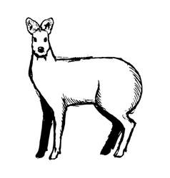 hand drawn musk deer sketch on white vector image
