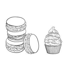 Sketch matcha flavor macaroni cupcake vector