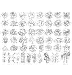 Succulent and cacti set hand drawn desert flower vector