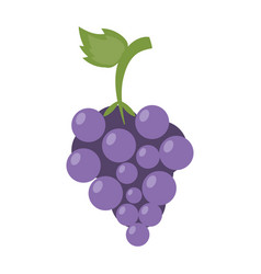 sweet fruit grapes vector image