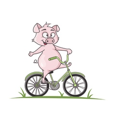 Pig on a bike vector image