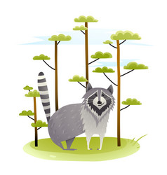 raccoon in the wild nature with trees vector image vector image