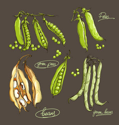 Hand drawing legumes on a dark backgroun vector