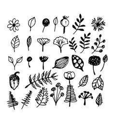 hand drawn plant vector image