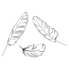 set bird feathers vector image