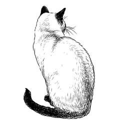 Sketch sitting domestic siamese cat vector