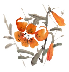 Tiger lily vector image