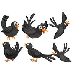 Black birds vector