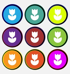 Flower rose icon sign Nine multi-colored round vector