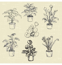 Flowers in pots hand drawn sketches vector