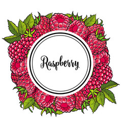 fresh ripe raspberries in natural composition in vector image