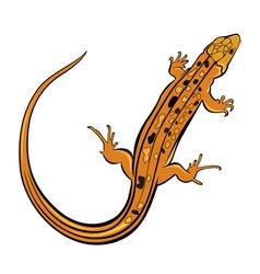 gecko lizard vector image