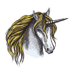 Unicorn horse sketch of animal head with horn vector
