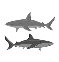 Sharks Set of two large sharks isolated on white vector image vector image