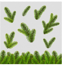 fir tree isolated transparent background vector image