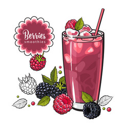 raspberry and blackberry summer cool drink with vector image