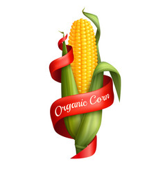 Realistic corn with ribbon vector