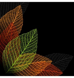 Skeleton leaf background vector image