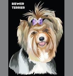Colorful biewer terrier image vector