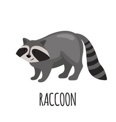cute raccoon in flat style vector image