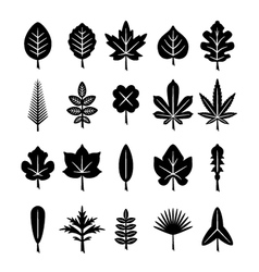 Set icons of leaf vector image vector image