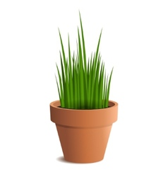Green grass in a pot isolated on white background vector image vector image