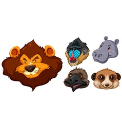 Animal heads on white background vector image