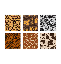 animal skins pattern african jungle animals vector image