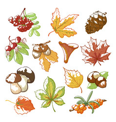autumn hand drawn set vector image