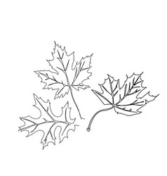 autumn leaves maple oak vector image
