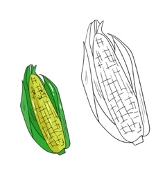 Educational game coloring book corn fruit vector