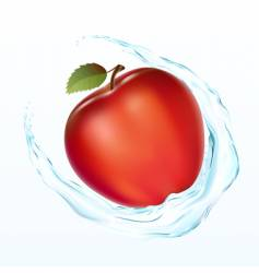 apple with a water vector image vector image