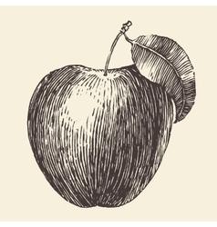 Apple Vintage Engraved Hand Drawn vector