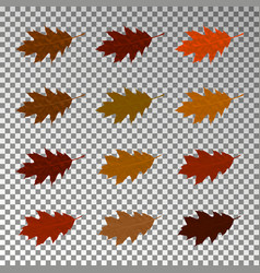 Autumn realistic leaves isolated on transparent ba vector
