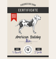 dog show certificate with american bulldog vector image
