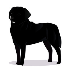 labrador retriever dog vector image