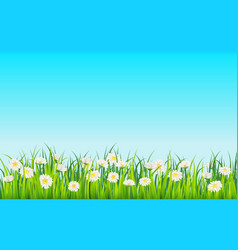 spring field flowers daisies chamomile and vector image