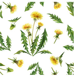 watercolor seamless pattern with dandelion vector image